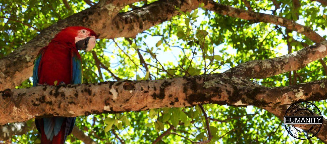 perroquet arbre